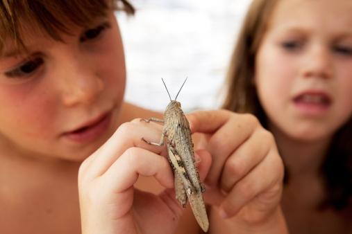 Если ребенка укусило насекомое