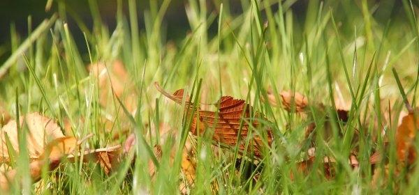 Осенняя песня травы. С.Козлов