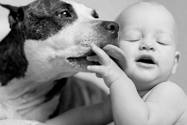Какую выбрать породу собаки для семьи с детьми?